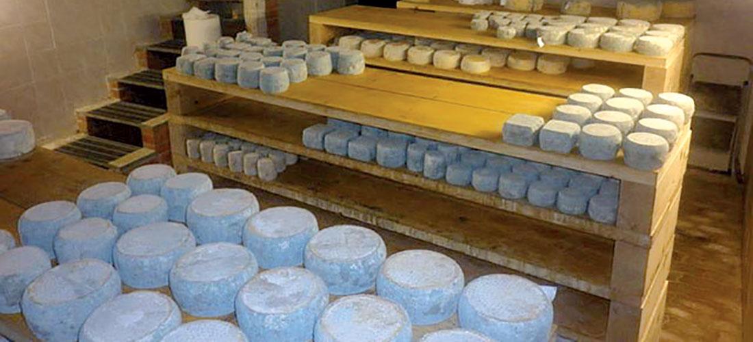 conservare i formaggi